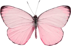 265-2651774_49-images-about-butterflies-on-we-heart-it.png
