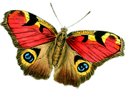 butterfly_PNG_big_size.png