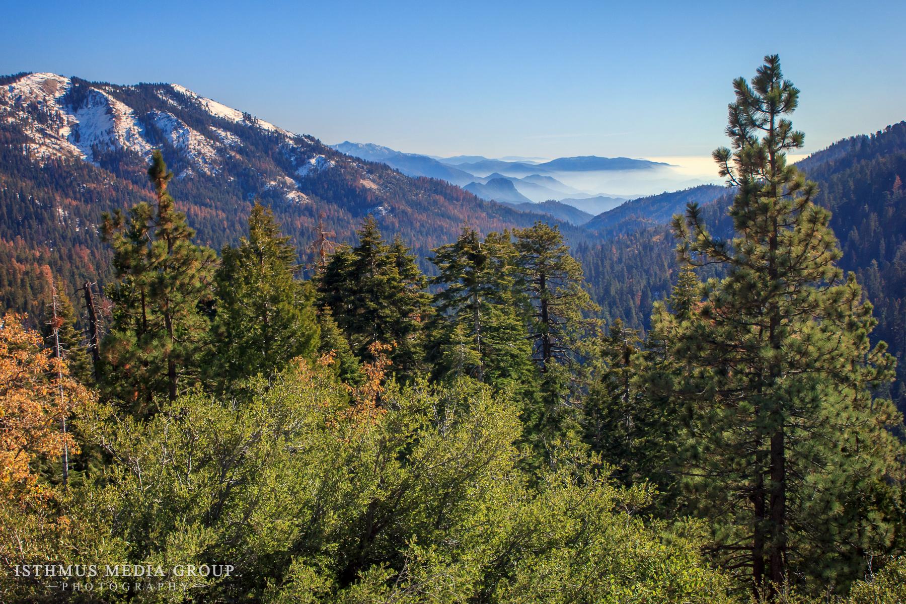 Giant Sequoia - 1462