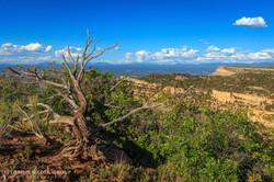 Mesa Verde - 1837