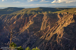 Black Canyon of The Gunnison - 2386