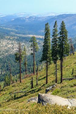 Yosemite National Park - 9360