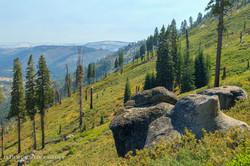 Yosemite National Park - 9362