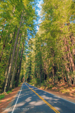 Humboldt Redwoods - 7877