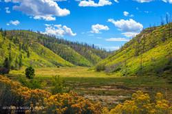 Mesa Verde - 1653