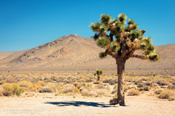 Death Valley - 0313