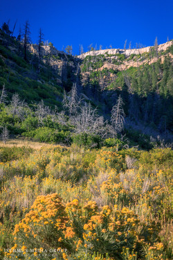 Mesa Verde - 1893