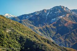 Giant Sequoia - 1377
