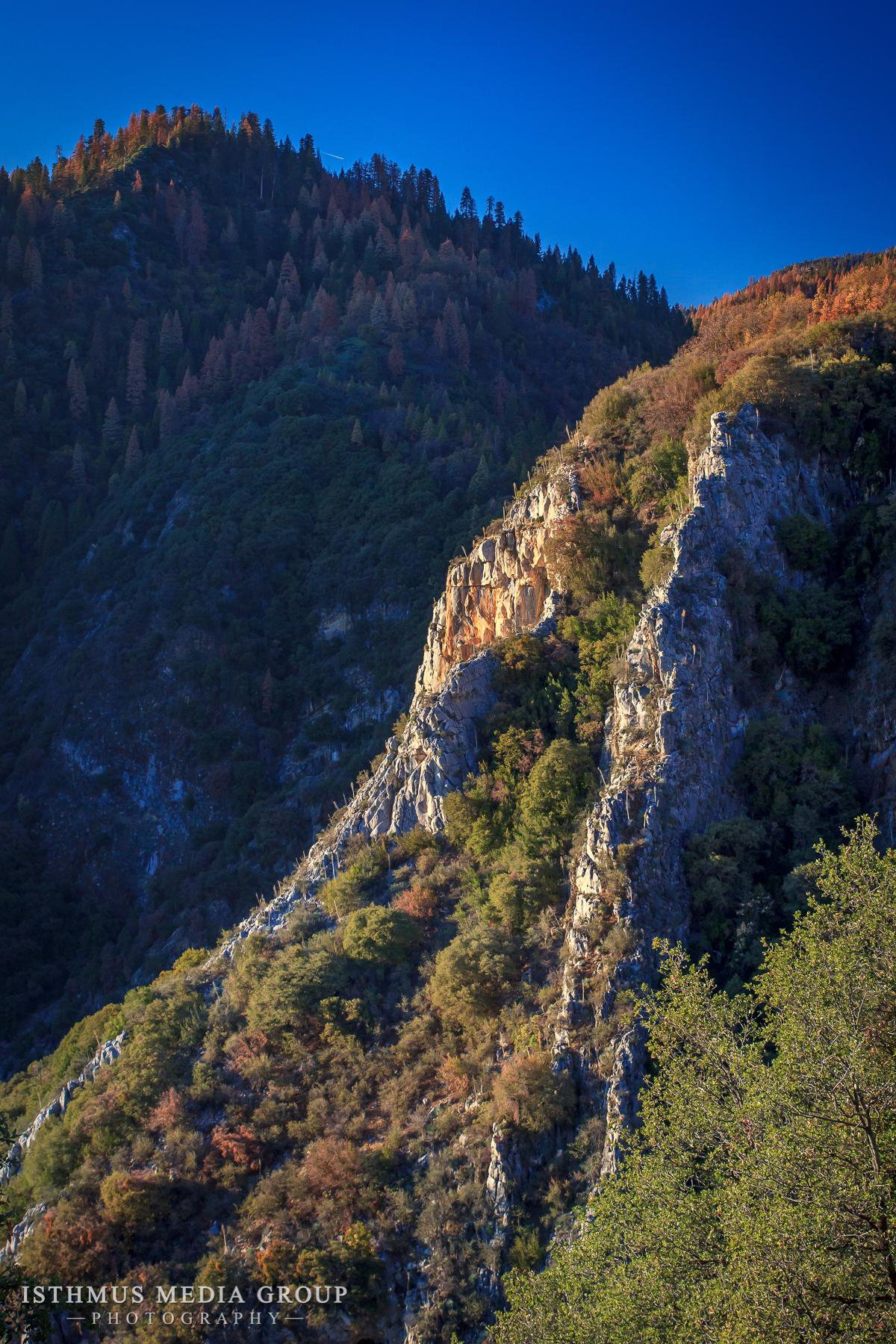 Giant Sequoia - 1311