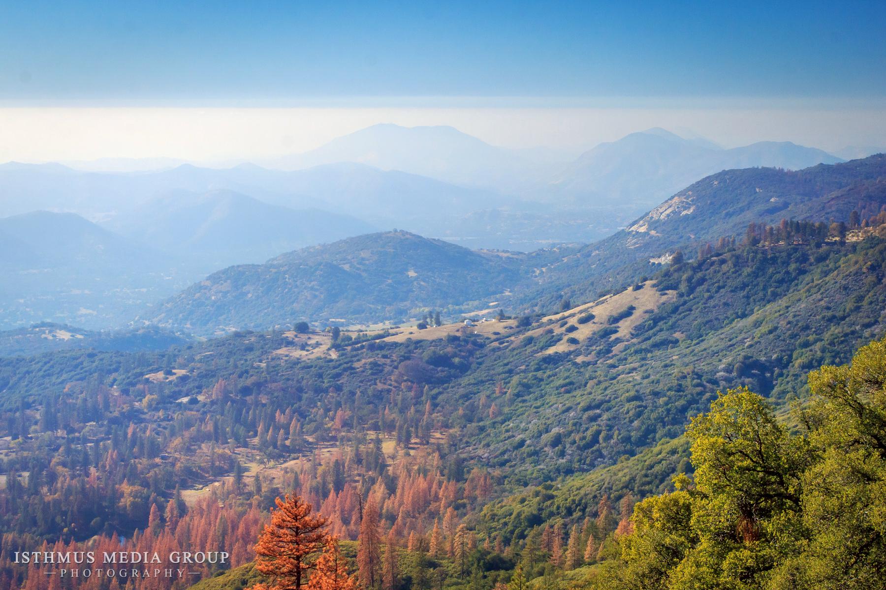 Giant Sequoia - 1468
