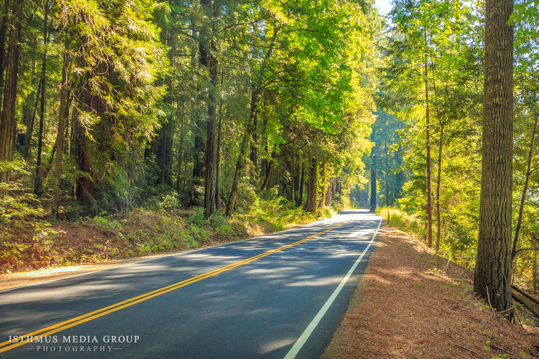 Humboldt Redwoods - 7874