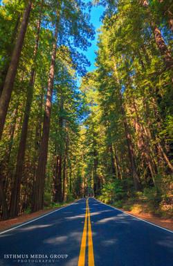 Humboldt Redwoods - 7859