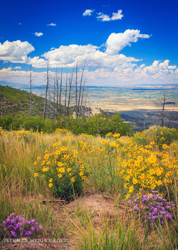 Mesa Verde - 1676