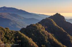 Giant Sequoia - 1313