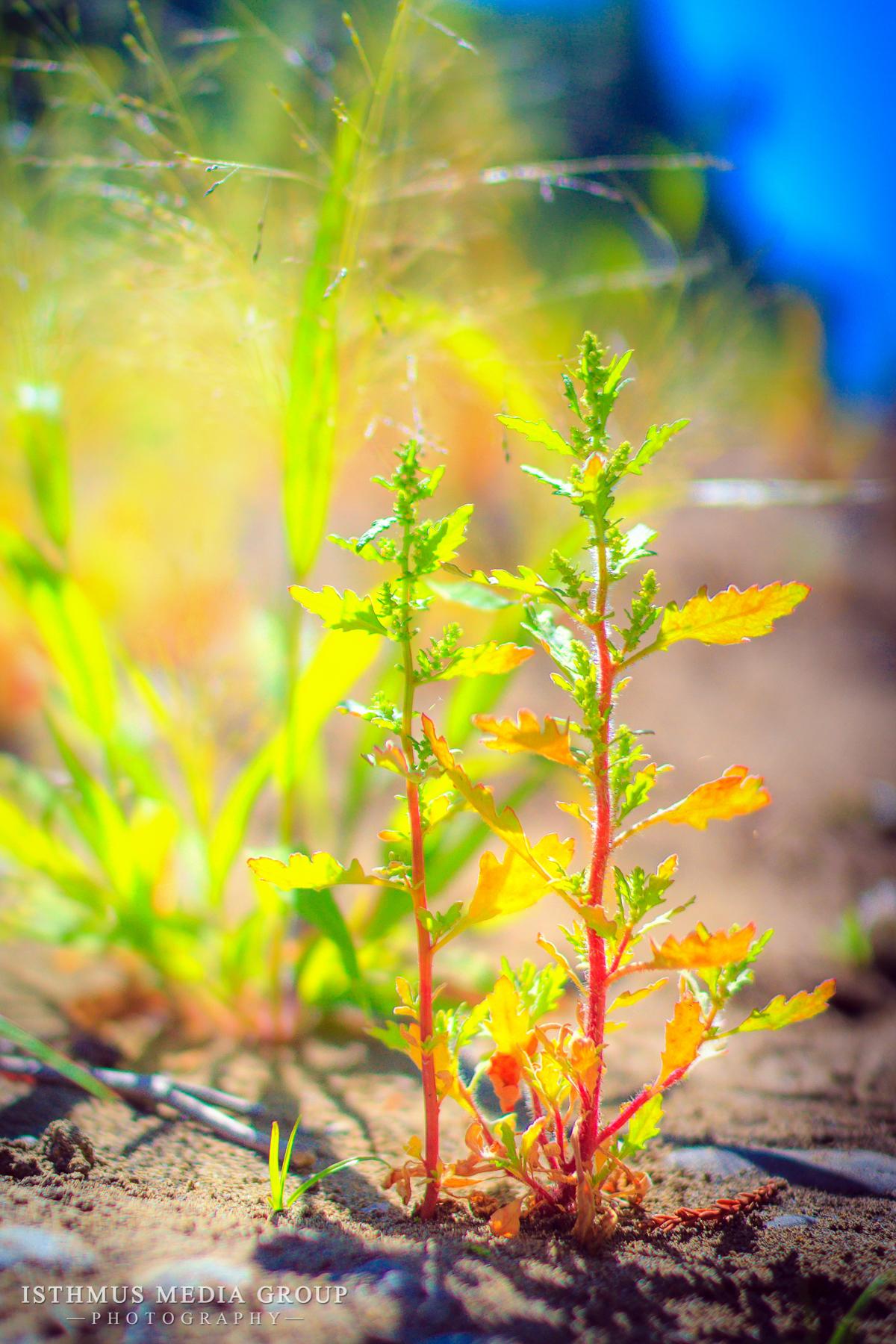 Humboldt Redwoods - 7917