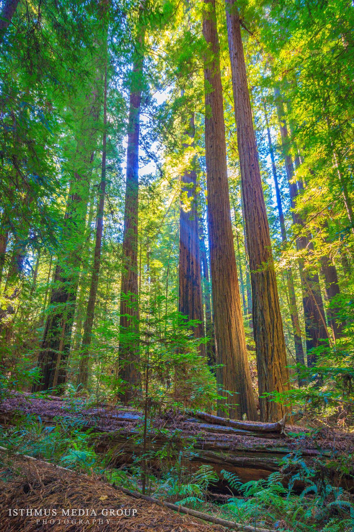 Humboldt Redwoods - 7892