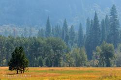 Yosemite National Park - 9562