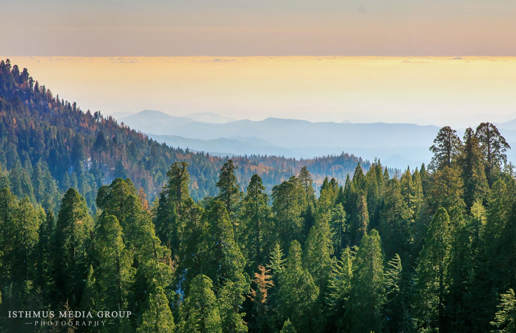 Giant Sequoia - 1280
