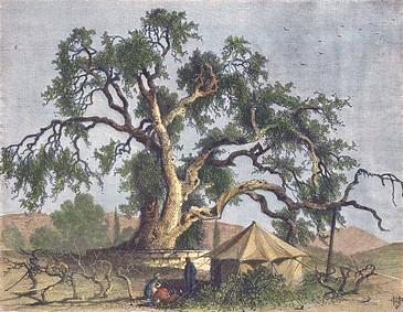 Die Mamreeiche in Hebron in der zweiten Hälfte des 19. Jahrhunderts. (Quelle: Wikimedia, Picturesque Palestine)
