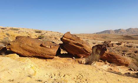 Versteinerte Bäume im Großen Krater/Israel
