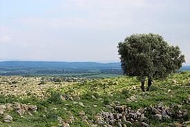 Israel Landschaft Schefela biblisches Hügelland