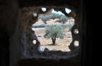 Blick über den alten Patriarchenweg von Jerusalem nach Hebron und die Olivenbäume am Wegsrand