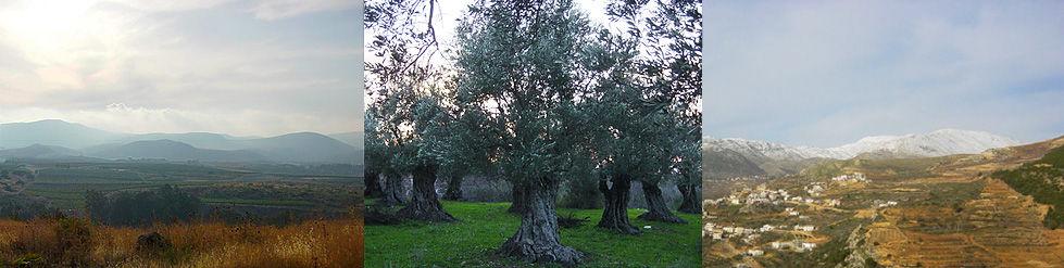Israel Hulatal Hermon Olivenhain