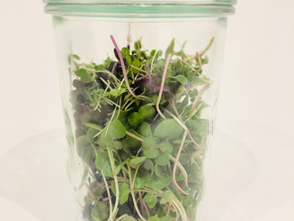 Microgreens Stay Fresh