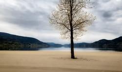 tree at the lake (1 of 1)