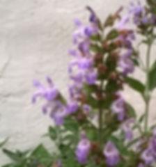 φασκόμηλο Αμοργού, AEGEAN HERBS