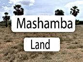 Mashamba.jpg