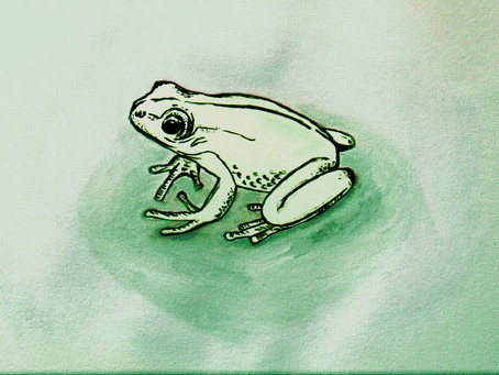 Of Frogs in Drain Pipes