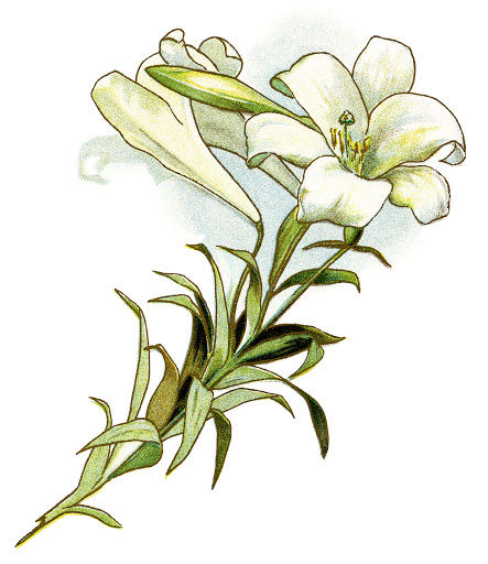 lilly for April website.jpg