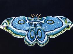 Moth 1901