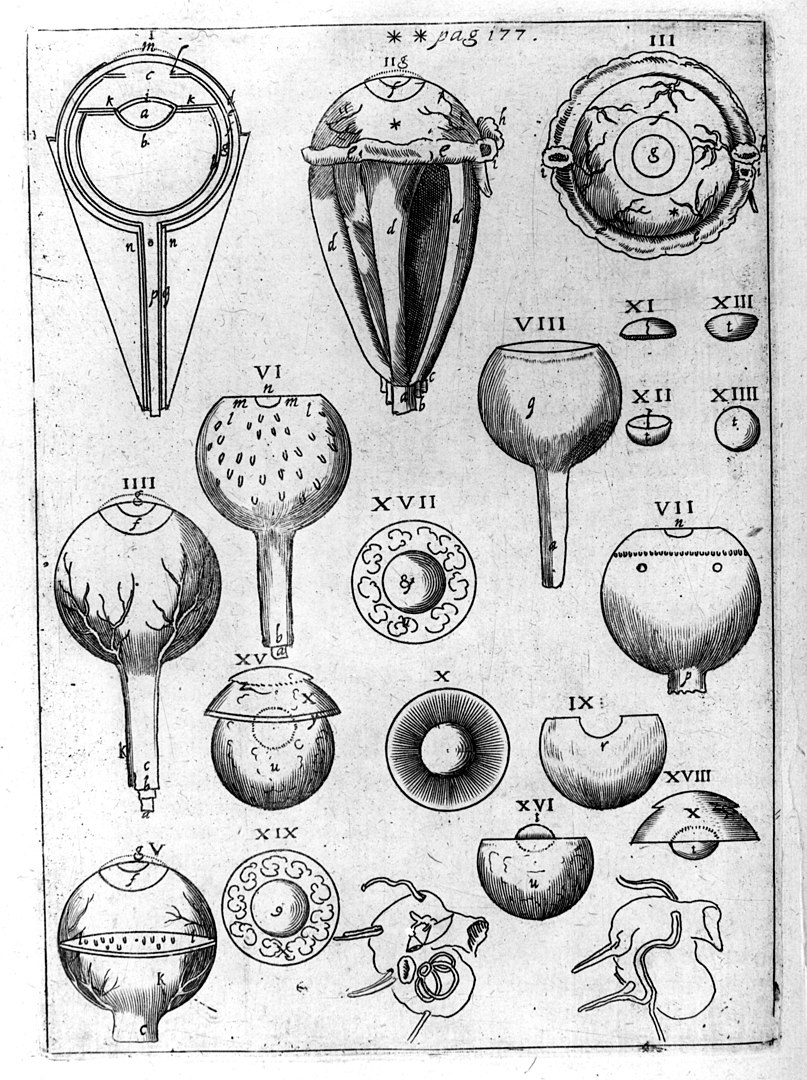 A plate from Astronomia Pars Optica