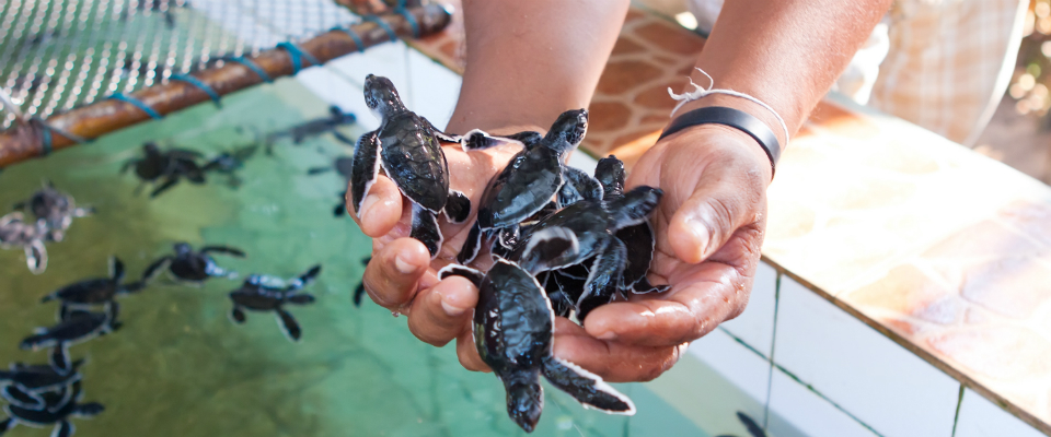 Baby_Turtles_Costa_Rica_hero_resize_11430889178