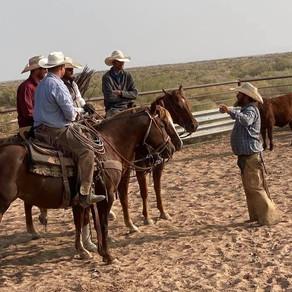 Spring Ranch Updates: Calves and Breeding