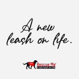 DFW Rescue Me Social Media Campaign