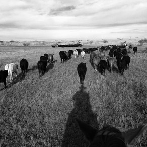 Ranching with Drought in Mind