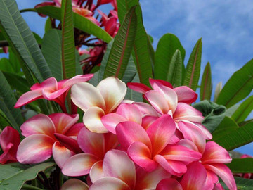 Welcome June in all Your Glory to our Stupendous Southern Zone of Costa Rica