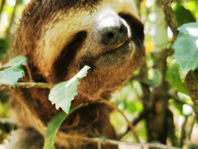 Being a Happy Sloth in our Sloooooowing Down Southern Zone of Costa Rica