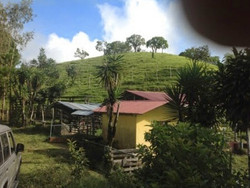 adc.land4.jpg