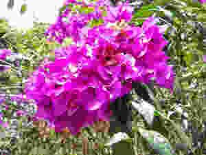 veraneras-fincapasiflora.jpg