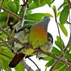 mama.birdie.jpg