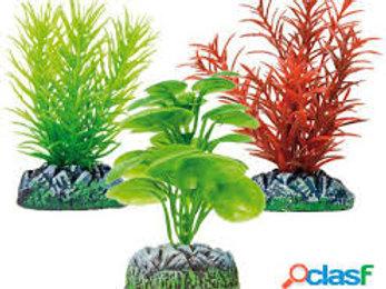 Set Plantas Acuáticas