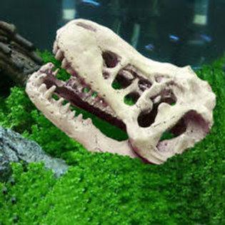 Cráneo Dinosaurio Resina
