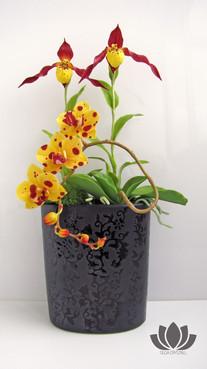 Орхидеи фаленопсис и циприпедиум