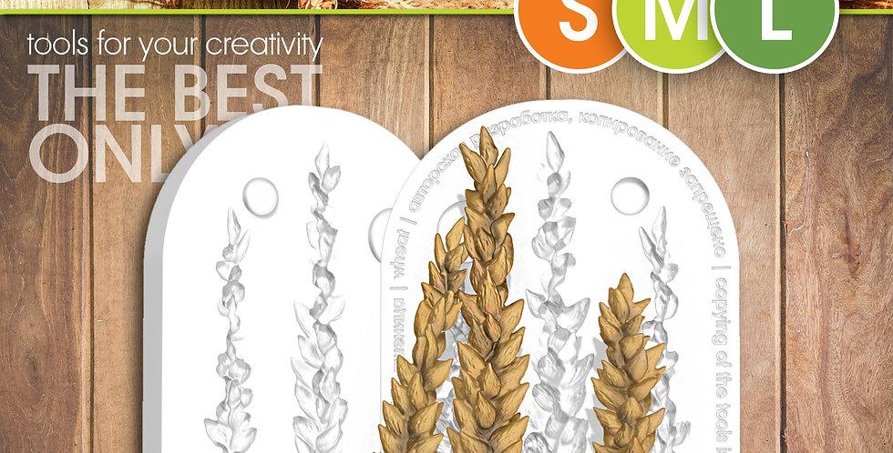 Пшеница колоски