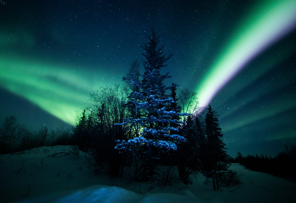 Northern lights over the Boreal Forest create a stunning, mysterious blue and green skyline.