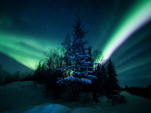 Amplifying the Voices Protecting the Boreal Forest